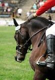 Koń na showjump wydarzeniu Obrazy Royalty Free