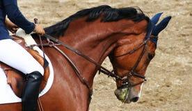Koń na showjump wydarzeniu Zdjęcia Royalty Free