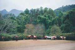 Koń na wzgórzu Obrazy Stock
