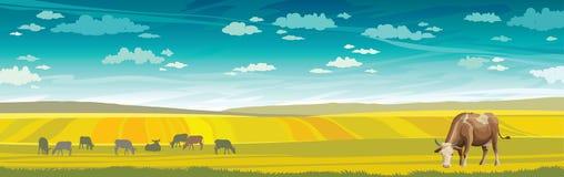 Ko och gräsplanäng lantlig liggande Arkivfoto