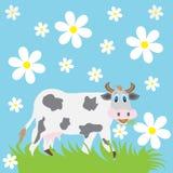 Ko och kamomill Arkivfoto