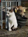 Ko och katt Royaltyfria Bilder
