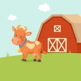 Ko på lantgård Arkivfoton