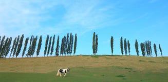 Koń pasa na ziemi uprawnej Zdjęcie Stock