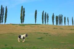 Koń pasa na ziemi uprawnej Zdjęcia Royalty Free