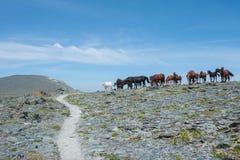 koń pastwiskowe góry Zdjęcie Royalty Free