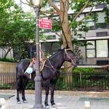 koń policja Fotografia Royalty Free