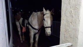 Koń przy barem Zdjęcie Stock