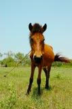 Koń przy gospodarstwem rolnym Zdjęcie Royalty Free