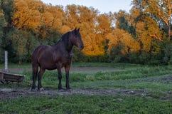 Koń przy zmierzchem Fotografia Stock