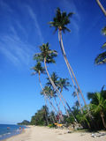 Ko samui, thailand. Tropical beach with palms, Thailand Royalty Free Stock Image