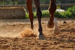 Końscy kopyta Zdjęcie Royalty Free