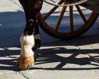 Końscy kopyta na flizach Obraz Royalty Free