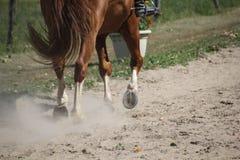Końscy kopyta w pyle Fotografia Royalty Free