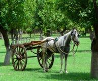 Końska fura przy parkiem w Agra, India Obrazy Royalty Free