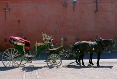 Końska jazda, Marrakech Maroko Fotografia Royalty Free