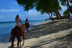 Końska jazda w Barbados Zdjęcie Stock