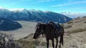Końska jazda w Kyrgzystan zdjęcie stock