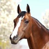 Końska patrzeje kamera Zdjęcia Royalty Free