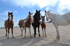 Końska rodzina Obraz Royalty Free