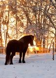 końska zima Zdjęcie Stock