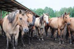Koński fabryki gospodarstwo rolne Fotografia Stock