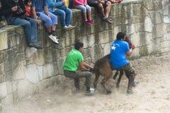Koński jarmark Zdjęcie Stock