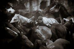 Koński jarmark Obrazy Royalty Free