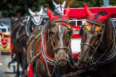 Koński Kareciany czekanie dla turystów przy Starym kwadratem w Praga Zdjęcia Royalty Free