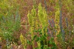 Koński kobylak na herbage tle Fotografia Royalty Free