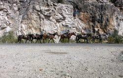Koński konwój obraz stock