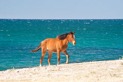 koński morze Zdjęcie Royalty Free