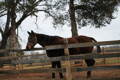 Koński rancho w Virginia Obraz Stock
