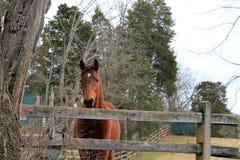 Koński rancho w Virginia Fotografia Stock