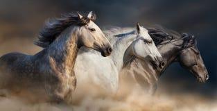 Koński stado bieg Zdjęcia Royalty Free