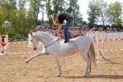 Koński szkolenia przedstawienie Fotografia Royalty Free