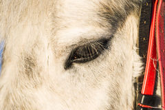 Koński twarz profilu widok Obrazy Stock