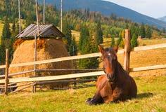 końskie góry Obraz Royalty Free