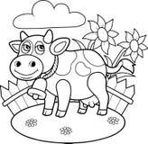 Ko som betar på en lantgård Arkivbild