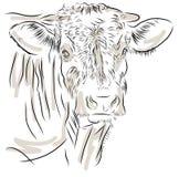 Ko som isoleras på en vit bakgrund Arkivfoton