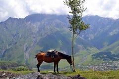 Koń w górach Kaukaz Fotografia Royalty Free