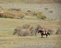 Koń w jesieni prerii Fotografia Stock