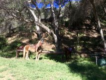 Koń w lesie Obrazy Royalty Free