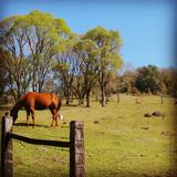 Koń w naturze obraz stock