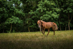 Koń w naturze zdjęcia stock