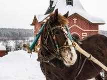 Koń w nicielnicie Zdjęcie Stock