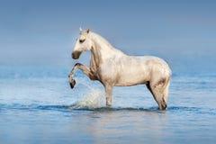 Koń w oceanie Zdjęcia Stock