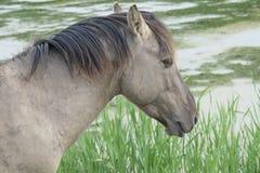 Koń w otwartym polu Obrazy Royalty Free