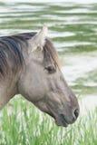 Koń w otwartym polu Zdjęcia Stock
