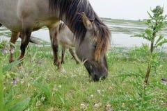 Koń w otwartym polu Fotografia Stock